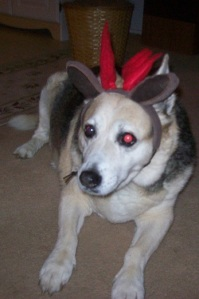 I swear the husband of a former co-worker once wore antlers to our office Christmas party. Antlers are cute on dogs, not grown men.